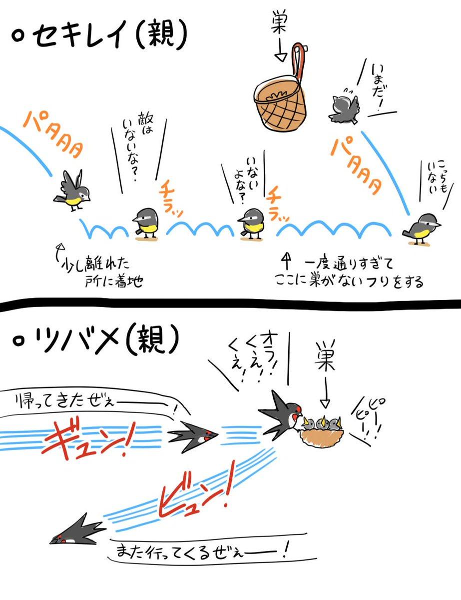 物置きのカゴに巣を作ったセキレイを見ててわかったツバメとの差。どっちも親子似てるってとこは共通してる。
