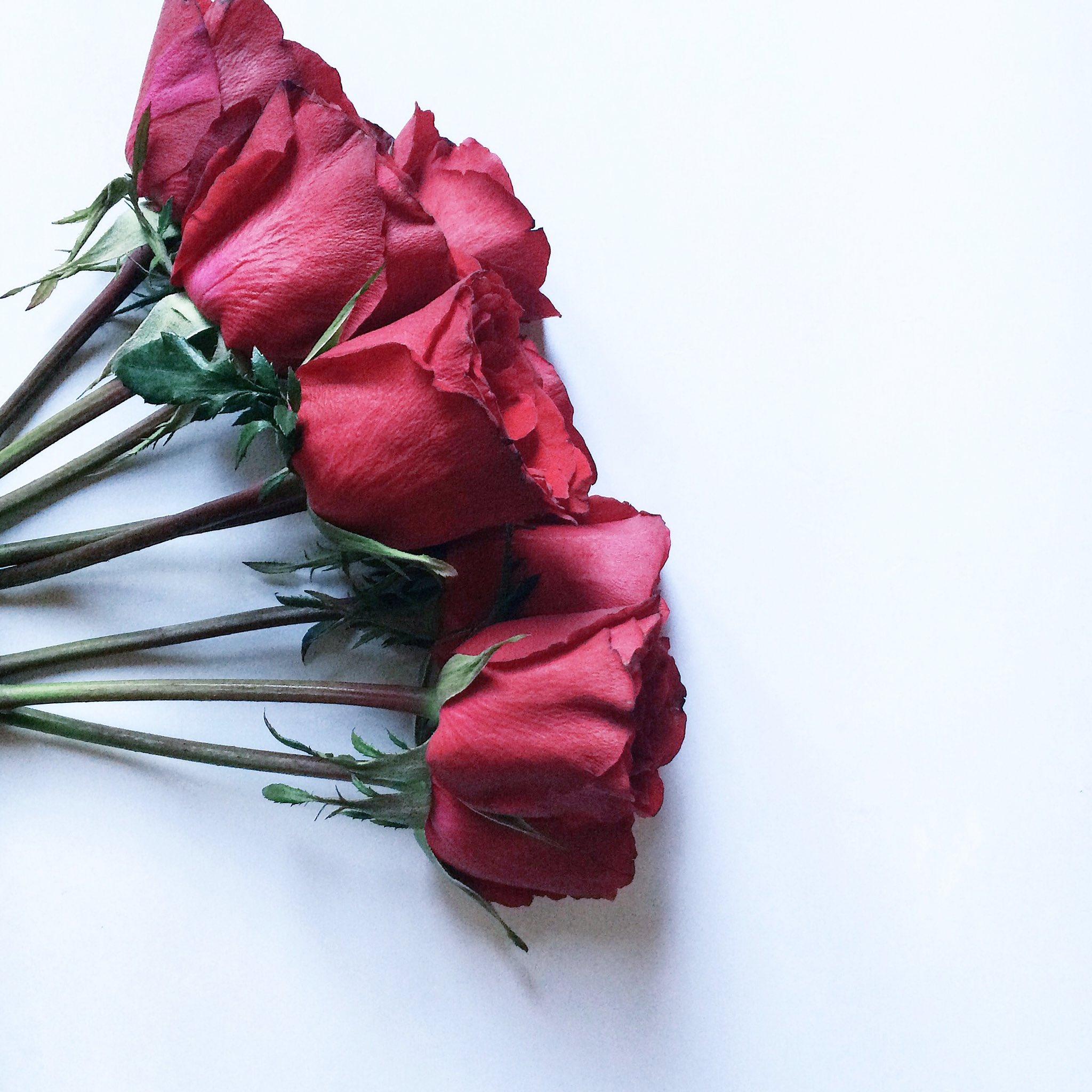 78 Gambar Bunga Editan Vsco Paling Cantik Gambar Bunga