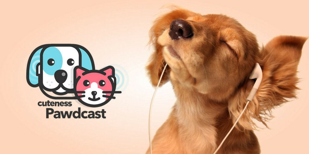 Episode 4 of the Cuteness Pawdcast is here: Are Pet Weddings The Cutest Things Ever?