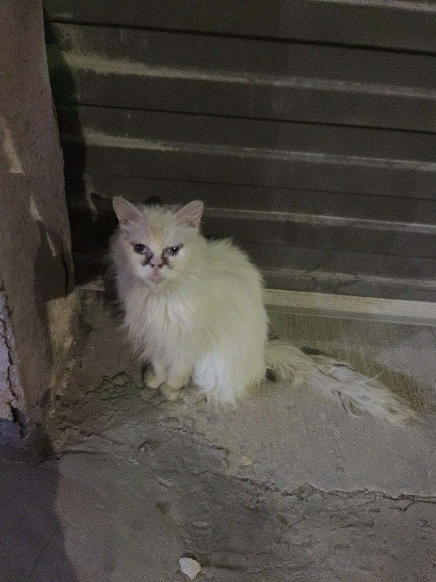 القط هذا مرمي بالشارع وباين له كم يوم. احد يقر يجي ياخذه ويهتم فيه؟ @RiyadhCats https://t.co/GABeCCkOs3