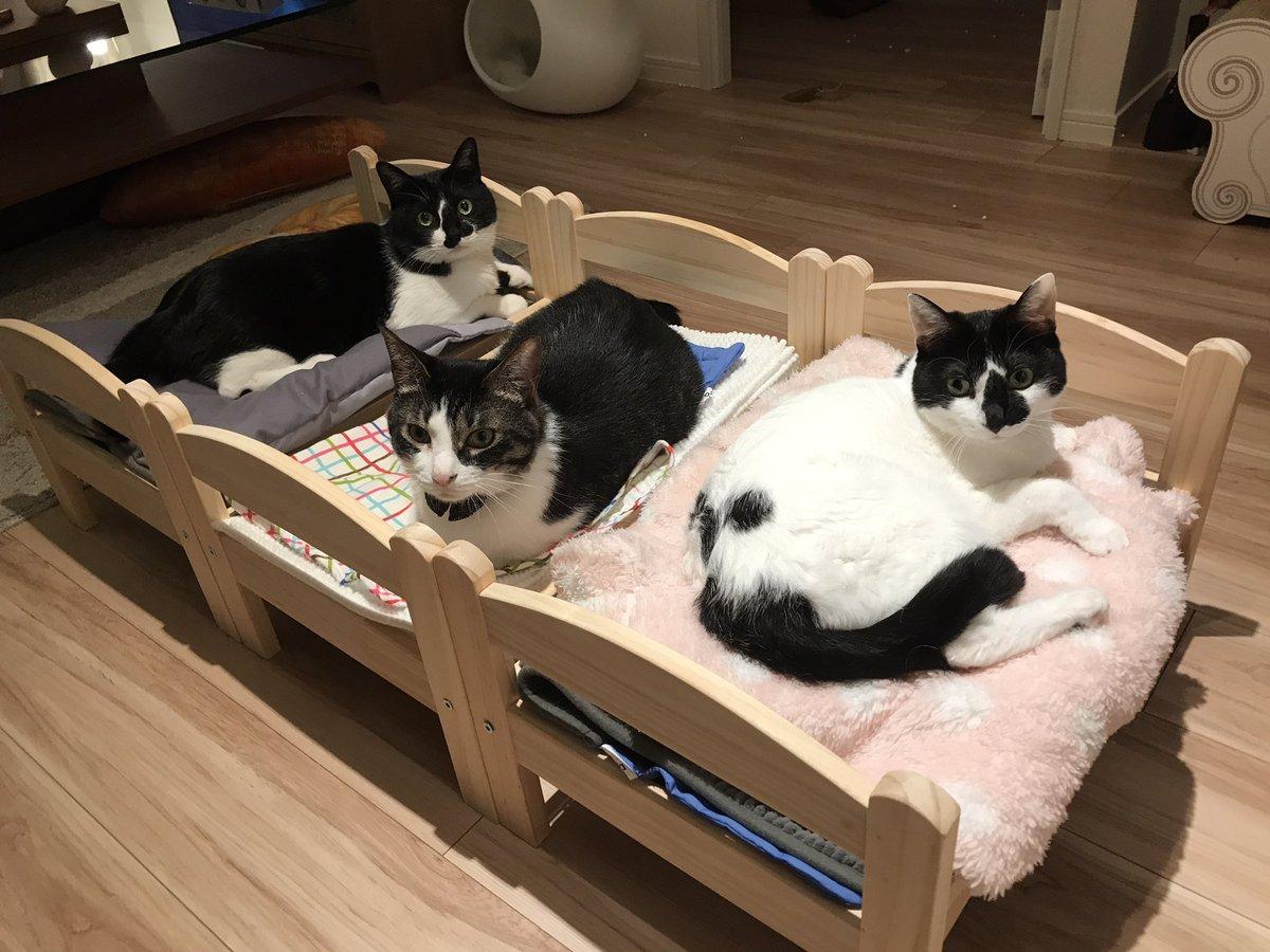 IKEAのベッドたくさん買ったらなにかしらの合宿感がすごいrikkusora.com/rikku/bedcat3 pic.twitter.com/1pS7P71jt5