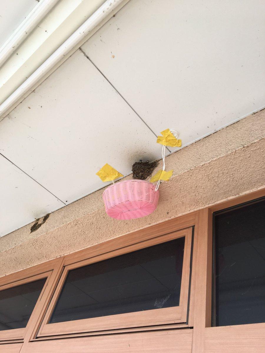 巣 対策 の ツバメ