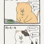 これは本当!頭の良い猫と悪い猫の物の見方の違い!