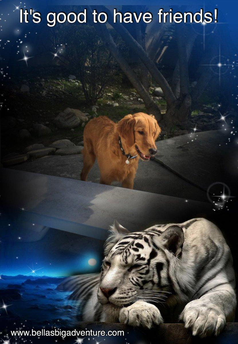 What a lovely night!   http://www. bellasbigadventure.com  &nbsp;    #dog #dogs #puppy #tiger #golden_retriever #travel #America #adventure #animals #pets #cute <br>http://pic.twitter.com/h4VH5KJXzs