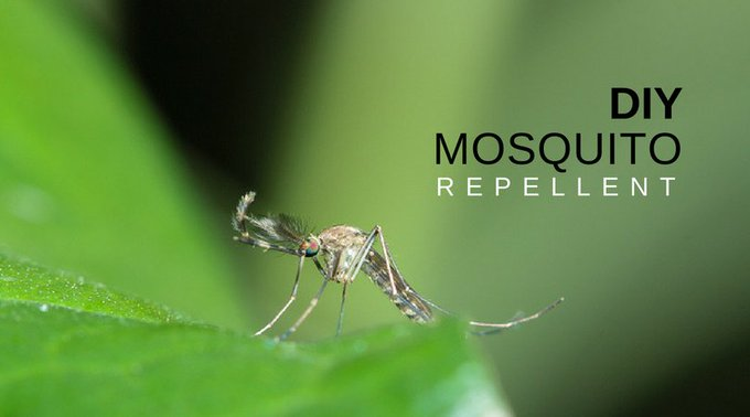 Natural Ways to Get Rid of Mosquitoes