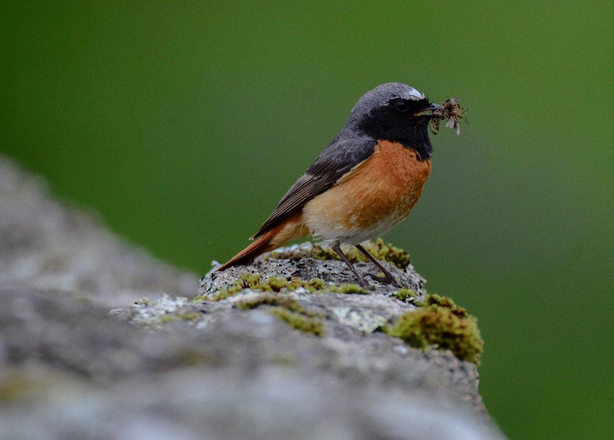 devon birds devonbirds twitter