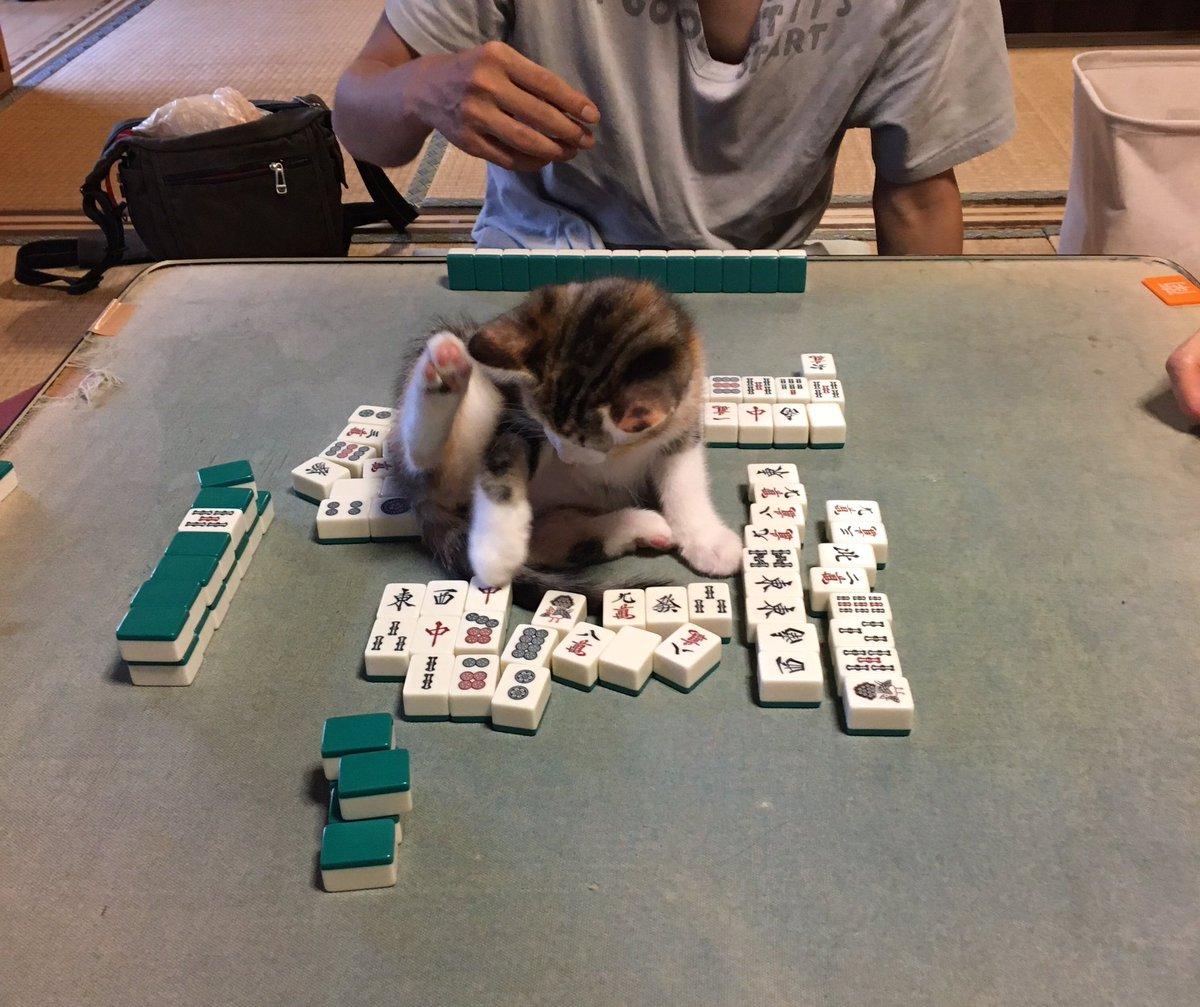 仔猫がいる状況で麻雀をするとこうなることは予想できたが、みんなかわいいから許している。かわいいってすごい。 pic.twitter.com/RaM8apbc5O