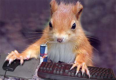 Image result for squirrel at computer