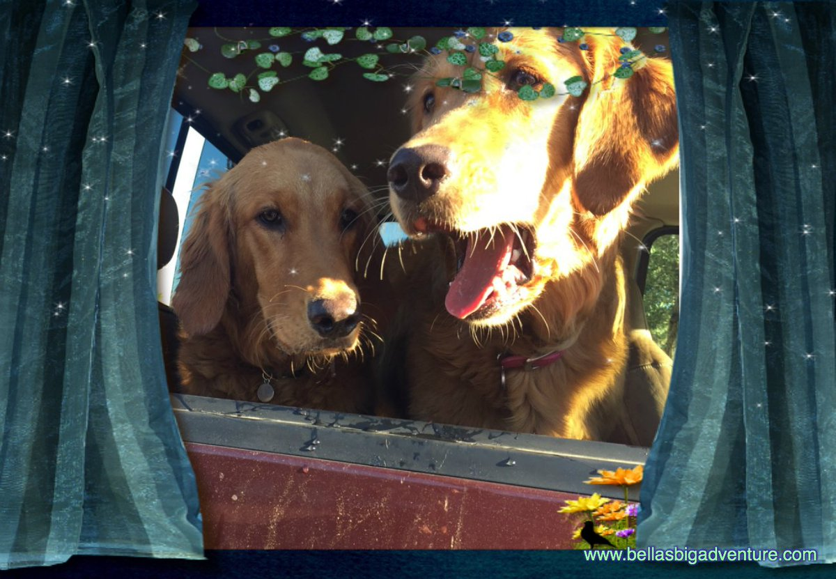 We are ready for another show!  Watch all our movies on YouTube @   https://www. youtube.com/bellasbigadven ture &nbsp; …   #dog #golden_retriever #dogs #travel #adventure <br>http://pic.twitter.com/sJLbq6evOD
