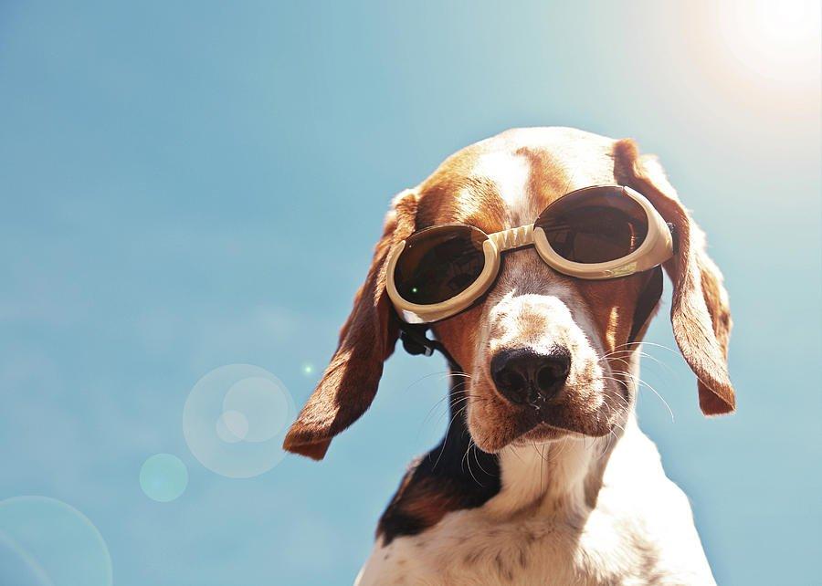 Смешные, картинка с псом в очках