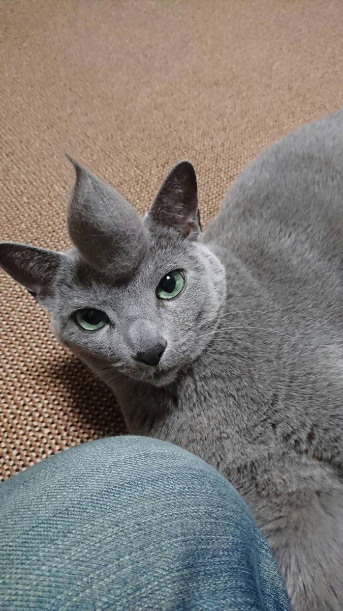 昨日猫をブラッシングしたら大量の毛がとれました。まとめたものがこちら。 pic.twitter.com/UXR68WVK6x