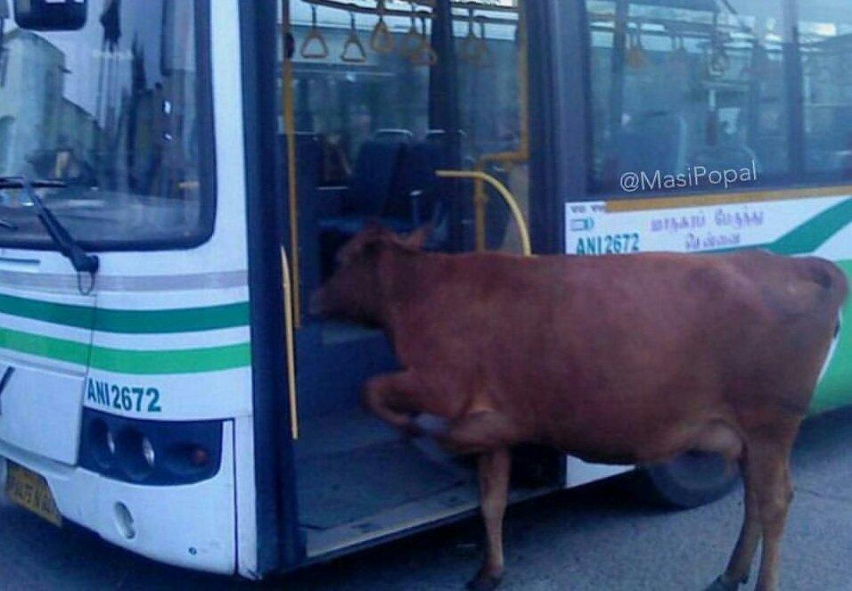 """Résultat de recherche d'images pour """"animal jokes in tamil"""""""