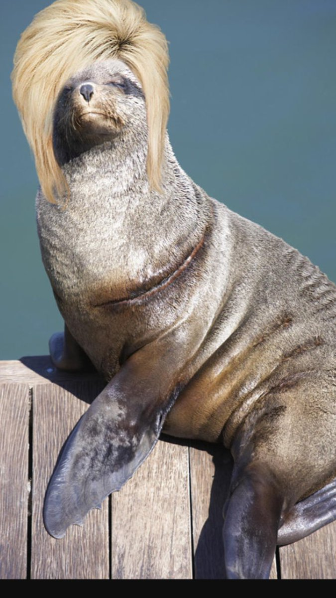 "So. I just googled ""Seal with hair"" @SoniaKruger #TheVoiceAU https://t.co/aj5bcleRgc"