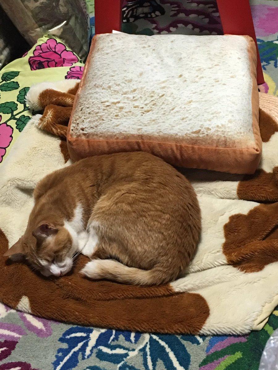 インターネットでニトリの食パンクッションにしずむ愛らしい猫や犬たちの画像をみてすぐさまニトリとやらに走ったけど…物事はそううまくはいかないのよ pic.twitter.com/KHK6IX6X8J