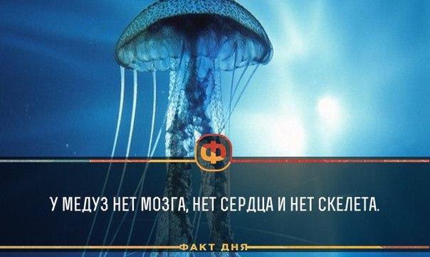 у медуз нет сердца картинки тому же