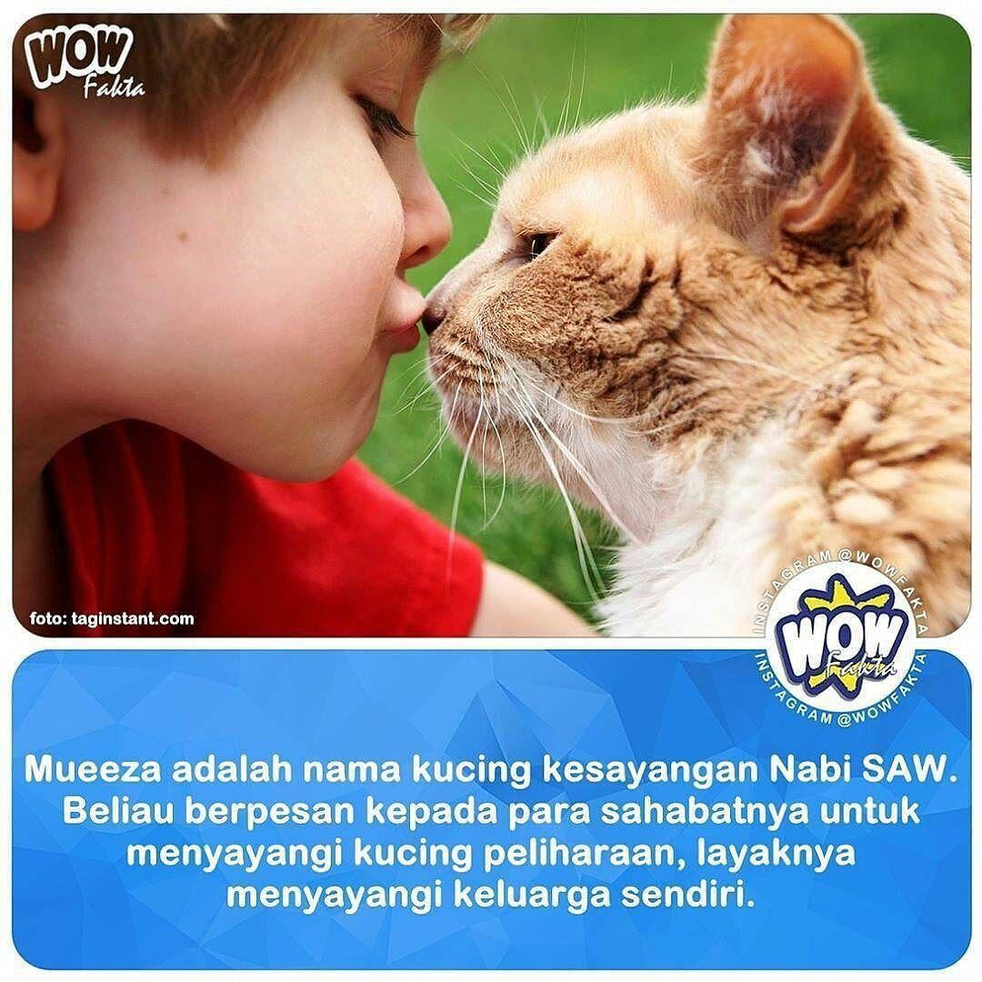 Nama Kucing Nabi Muhammad 81021 Nama Untuk Kucing Comel Lucu Dan Unik