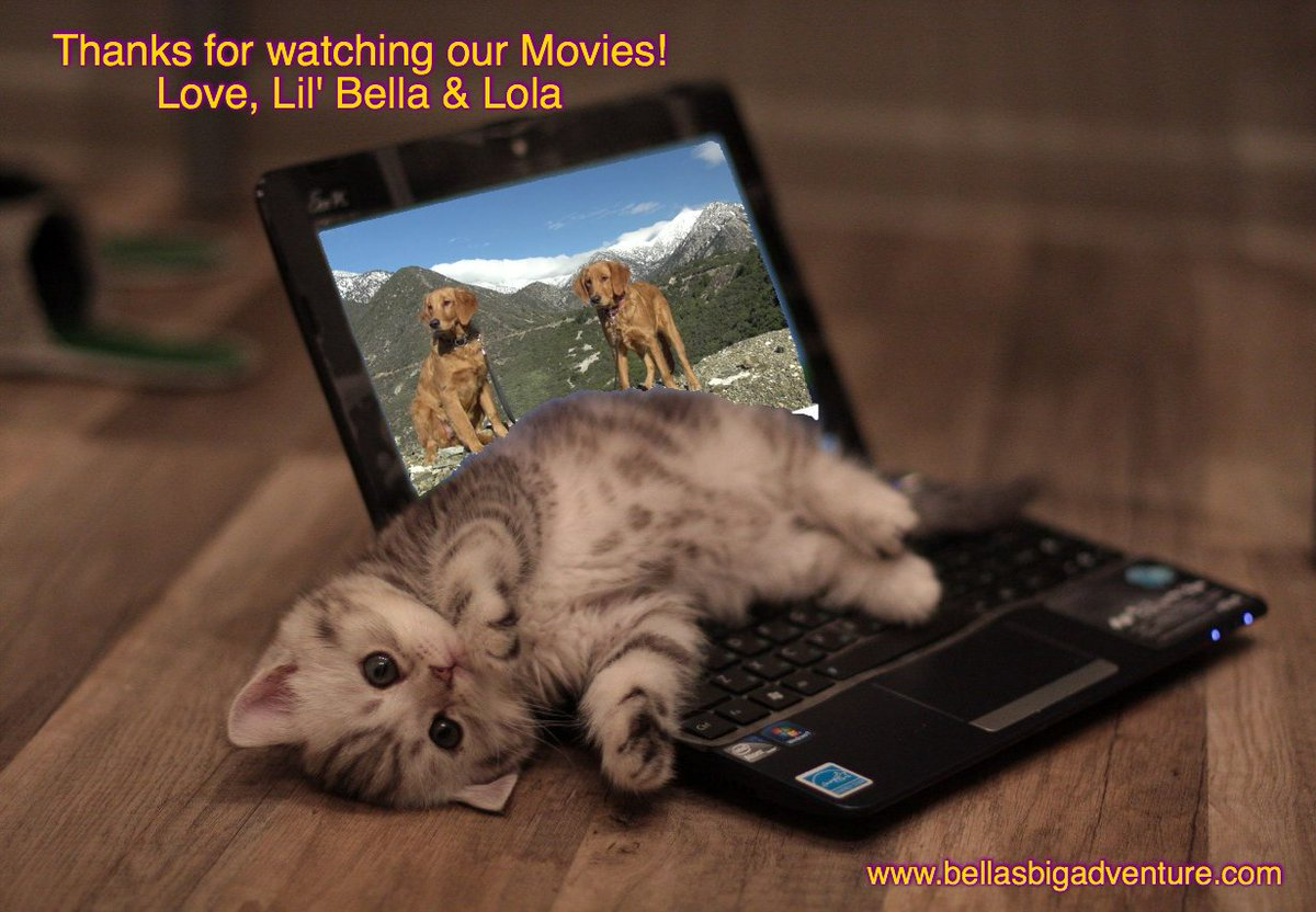 We are not sure what #kitty thinks!  Hope you enjoy our movies.   http://www. bellasbigadventure.com  &nbsp;    #dog #puppy #cat #pets #travel #America #adventure <br>http://pic.twitter.com/RQeuia1h8Y