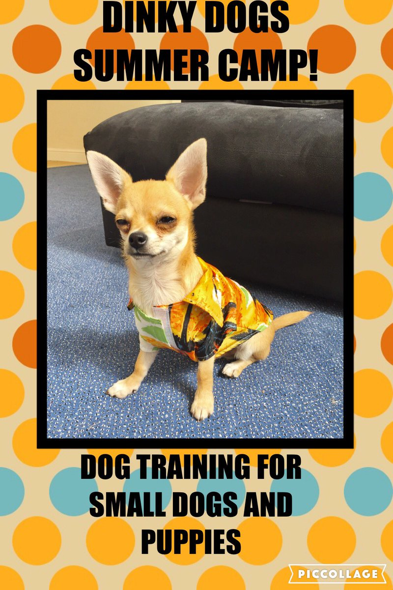 Aerial Jack On Twitter Dinky Dog Summer Camp Dog Training For
