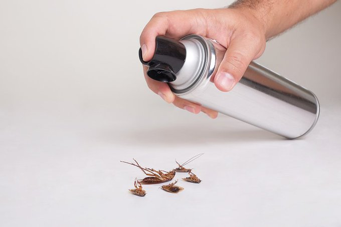 Here's how easy DIY pest control can be…