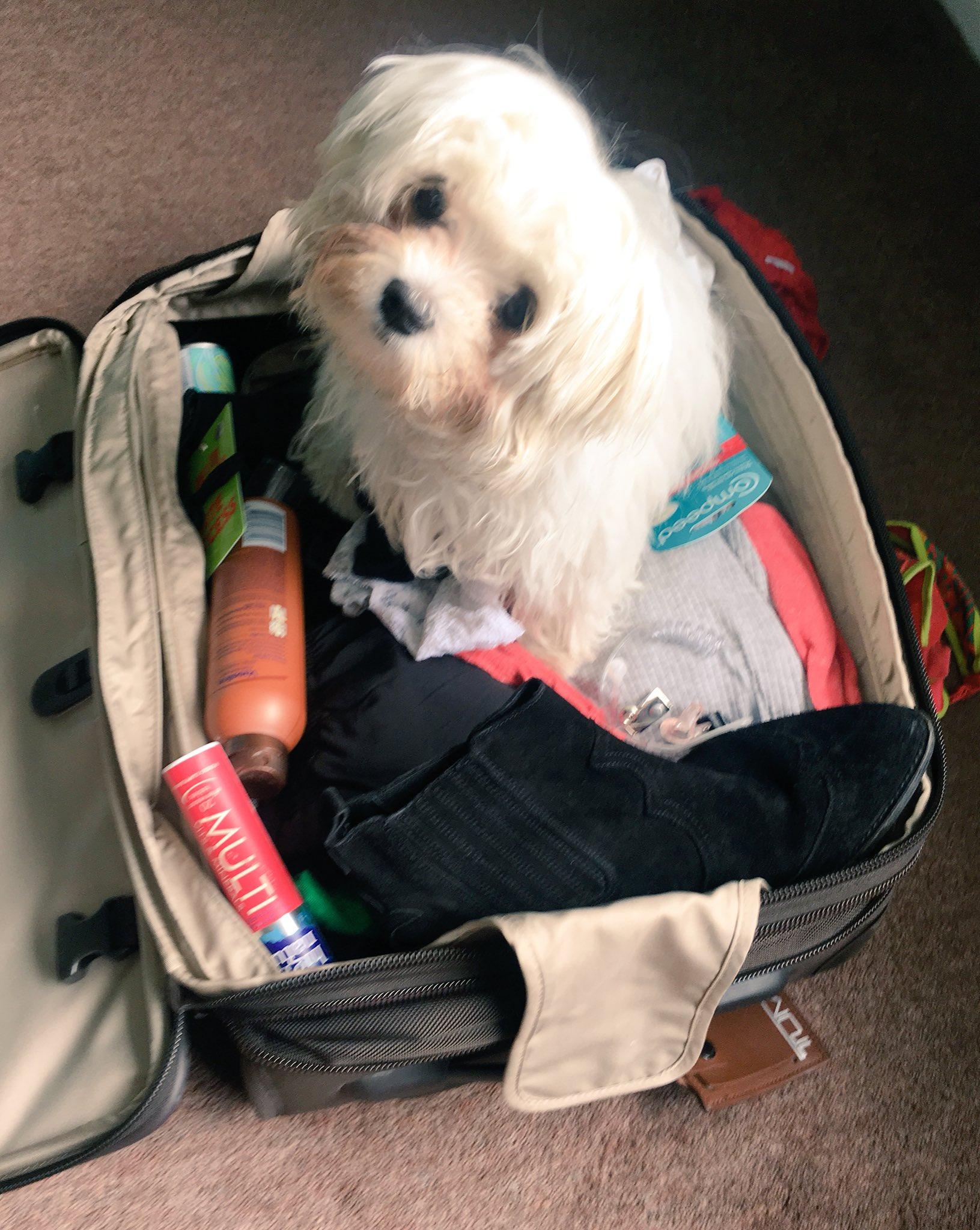 I'll help you unpack mum 😍 https://t.co/W9iJh7asF5