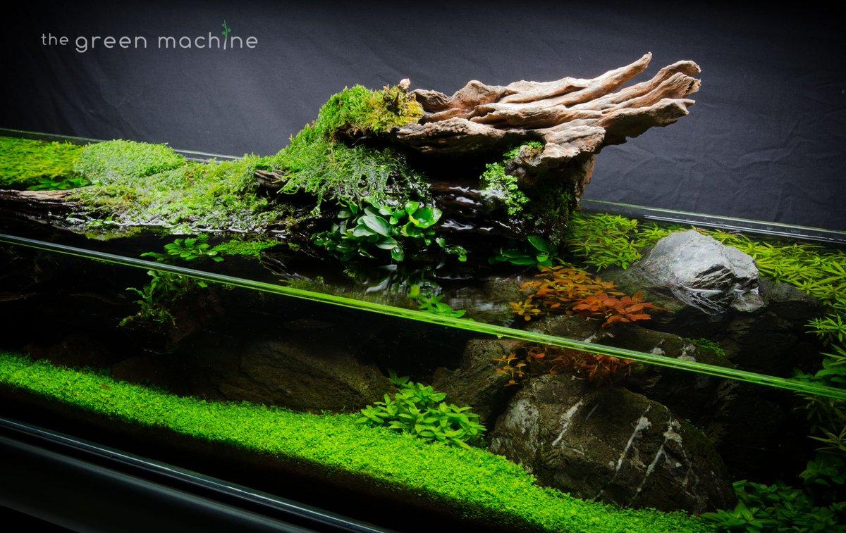 The Green Machine On Twitter Simplicity Shallow Aquascape Closeup Full Video Coming Soon Aquatics Aquascaping Aquascaper Aquarium Plantedtank Natureaquarium Https T Co Pmjc7q6ibj