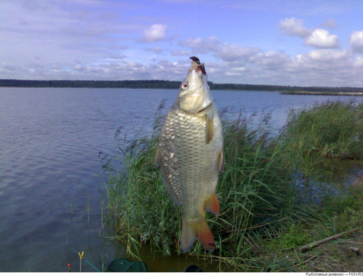 Отчет о рыбалке платные пруды