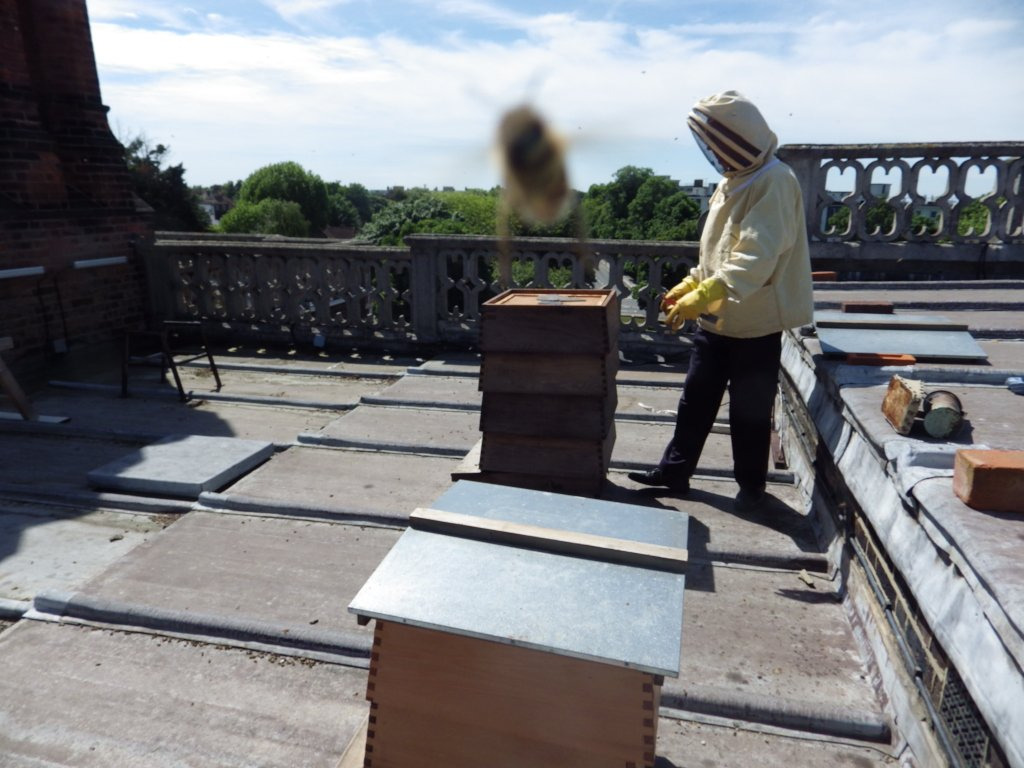 Today is #WorldEnvironmentDay and our bees are busy on our roof! #beephotobomb