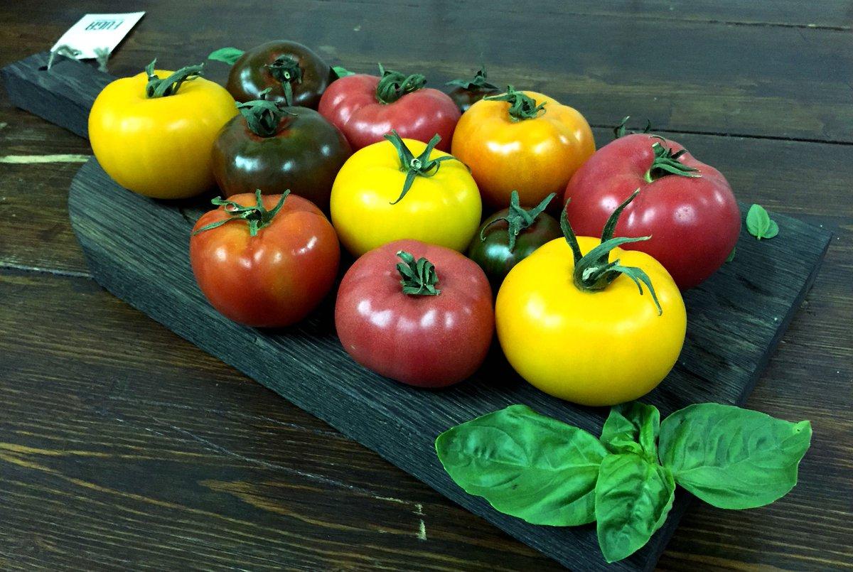 Картинки разных сортов помидор