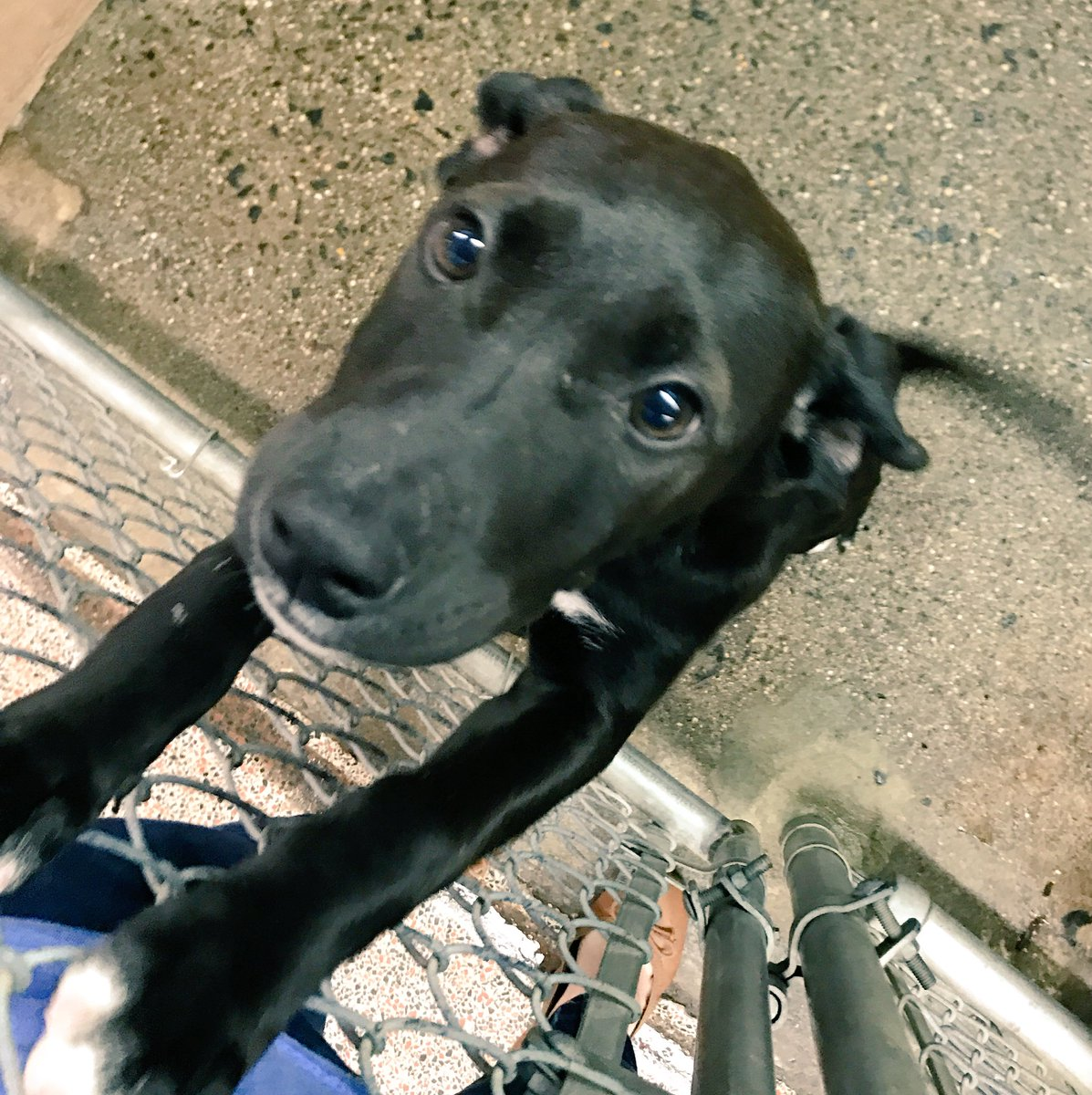All dogs and puppies are $50 off their adoption fees for the month of June! @Providence_AC https://t.co/tzCZ0boN2W