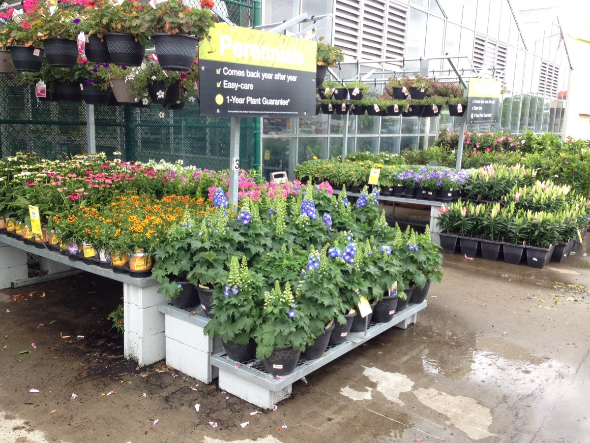 Clay Collins On Twitter The Blooms Are Out At Your Clarksville Indiana Home Depot Come Check Them Out Today Dyereric18 Millaya Ppsinhd