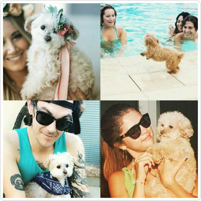 Happy birthday Maui! Hoje é  aniversário da cahorrinha da Ashley Tisdale.
