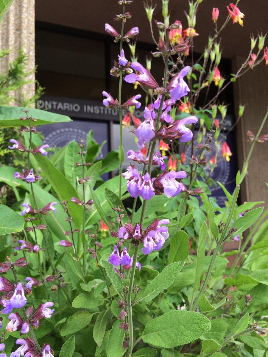 Oise Ese On Twitter Oises Indigenous Learning Garden Is Full Of