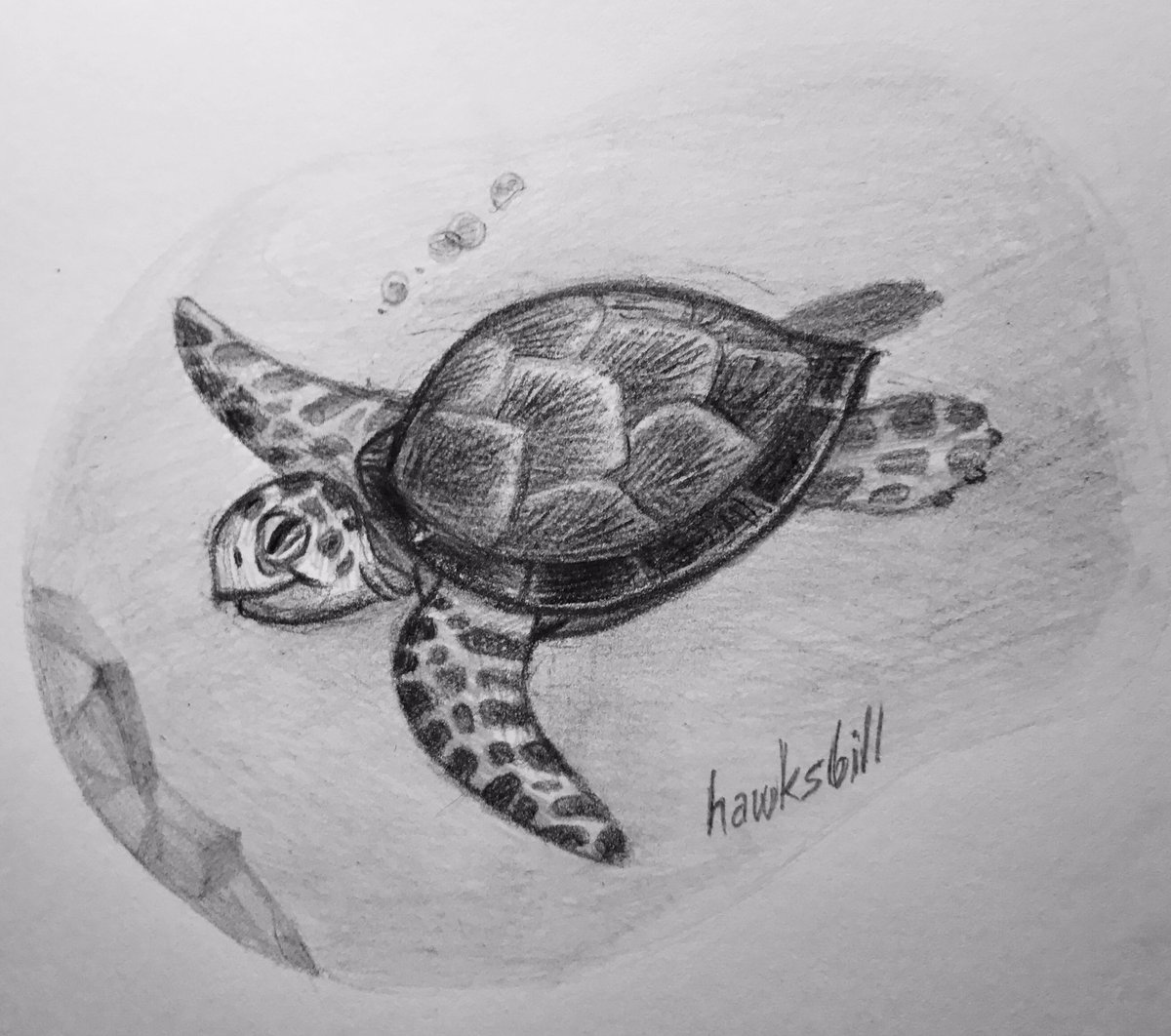 Kristine on twitter turtle drawing for animalalphabets