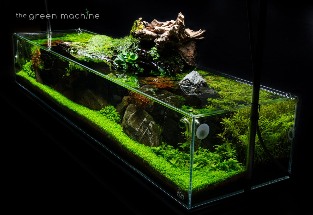 The Green Machine On Twitter Simplicity Aquascape Angle Shot