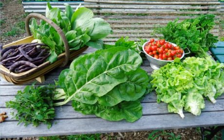 10 Edible Plants That Grow in Abundance Without Any Help