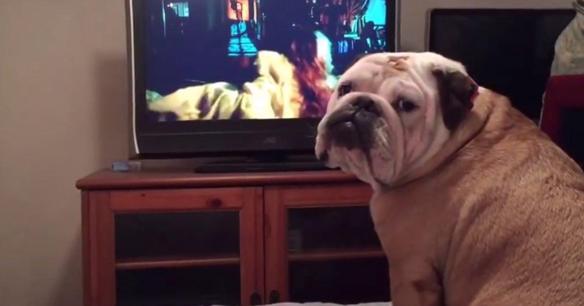 Resultado de imagen para bulldog barks