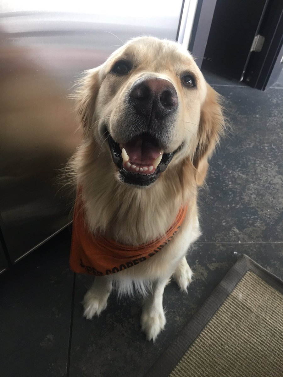RT to bless a timeline with a smiling Cooper