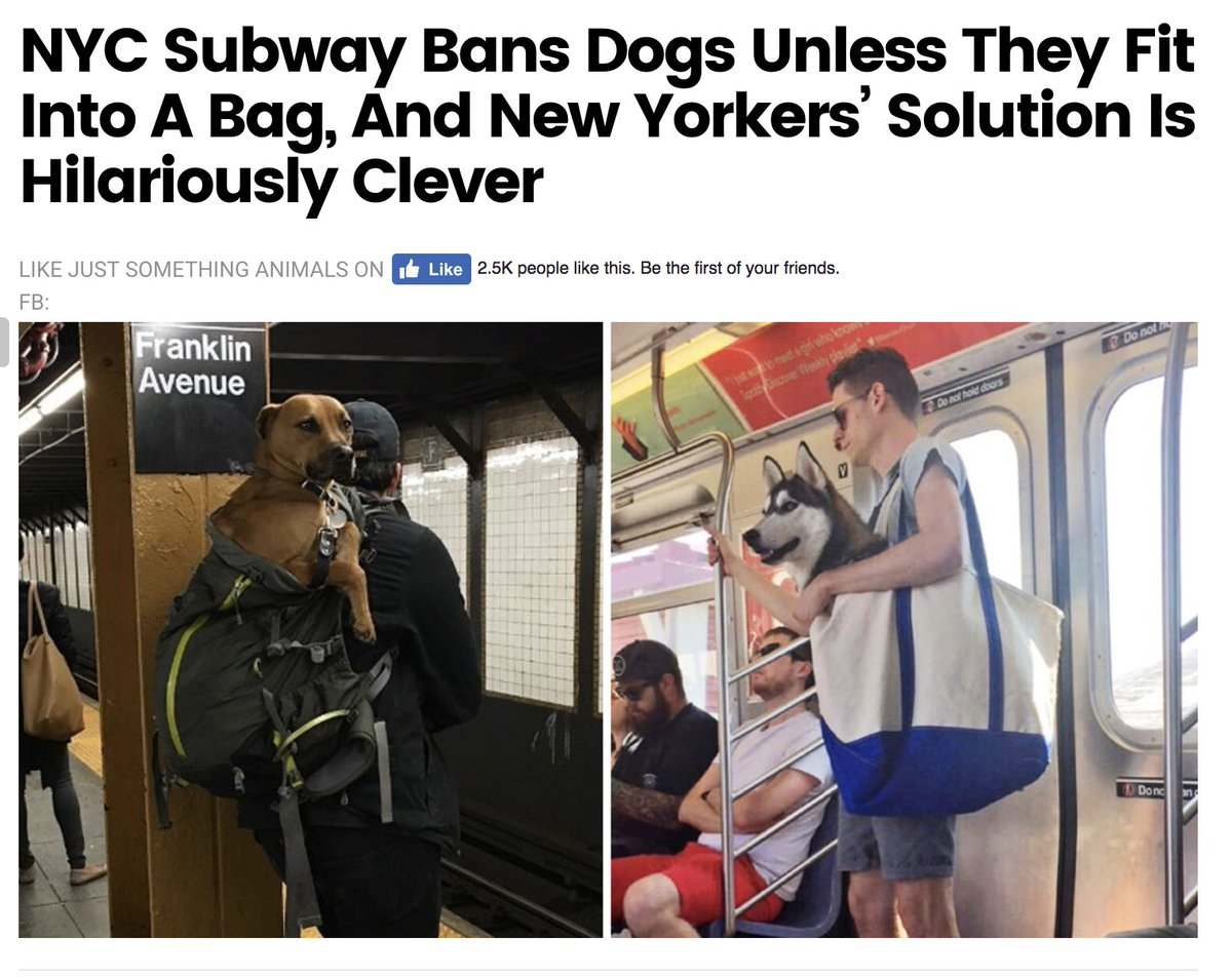 Shoshana Weissmann On Twitter I Love America Ht LearnLiberty - Nyc subway bans dogs unless fit bag new yorkers reacted