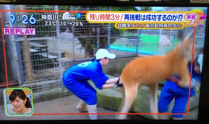 カンガルーの捕獲&保定が無理ゲーすぎる! 動物専門学校の生徒が悪戦苦闘する様子をご覧ください