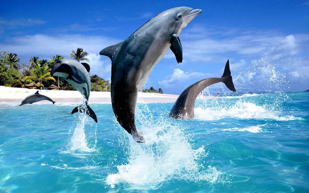 быть картинки на телефон дельфинчики насколько