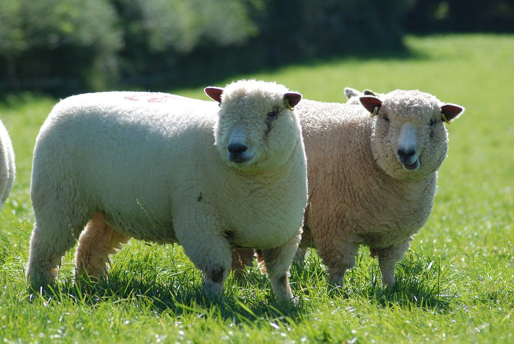 """&quot;Selecting the right #breeds &amp; #genetics is crucial to success, as is good #grasslandmanagement."""" @PastureForLife  http:// ow.ly/L7vX30co0Pc  &nbsp;  <br>http://pic.twitter.com/wMvJWt3MqS"""