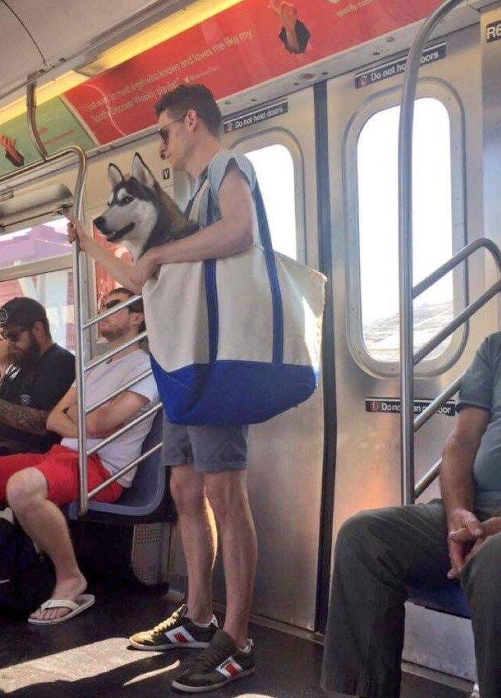 El metro de NY prohibió la entrada a cualquier perro que no quepa en una bolsa https://t.co/V37nZ2YhJy