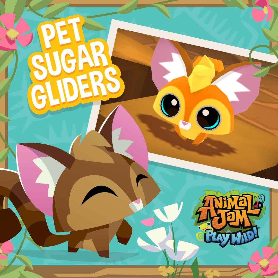 Animal Jam On Twitter Pet Sugar Gliders Have Arrived In Play Wild