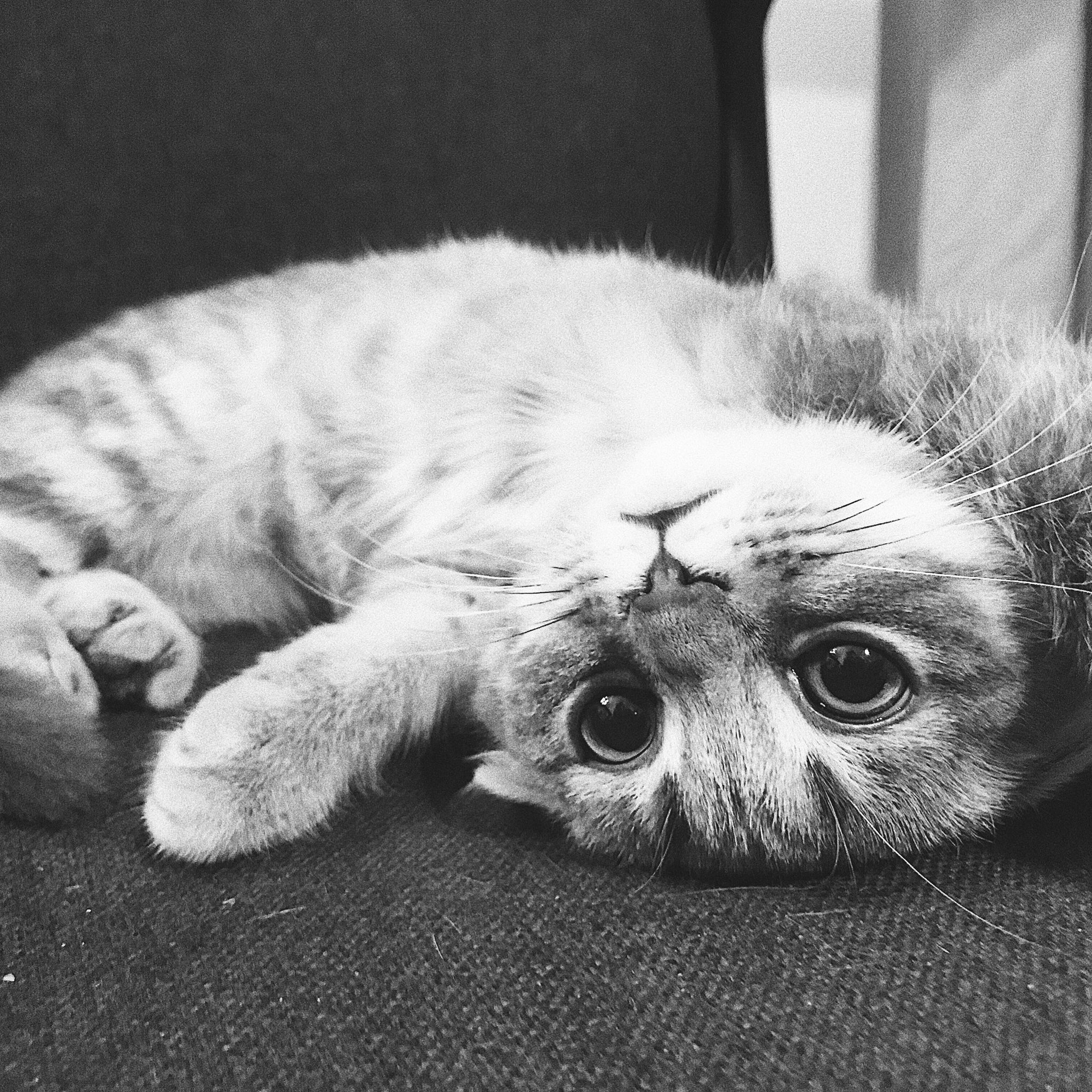 картинки кошек мур кнопку