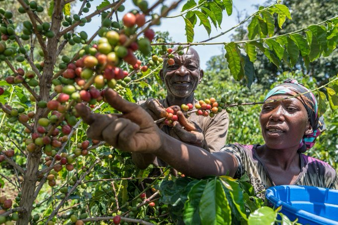 Inspiring visit to #DRC. Met with hardworking coffee farmers supported by @easterncongo & partner, @starbucks. https://t.co/tyiHcUTtKR