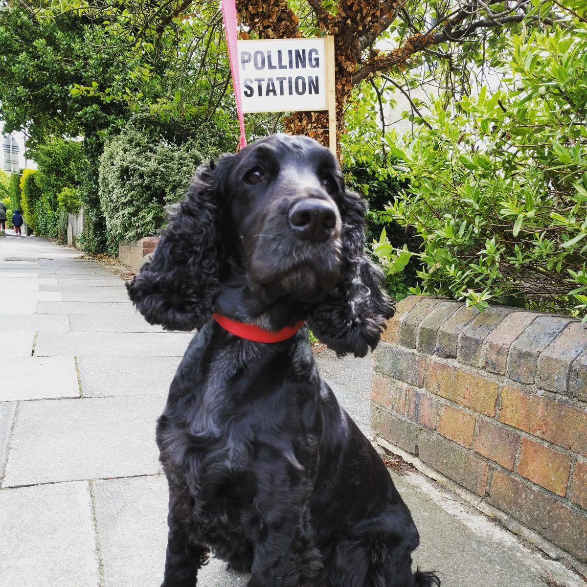Dont forget to vote today! #dogsatpollingstations #GeneralElection17