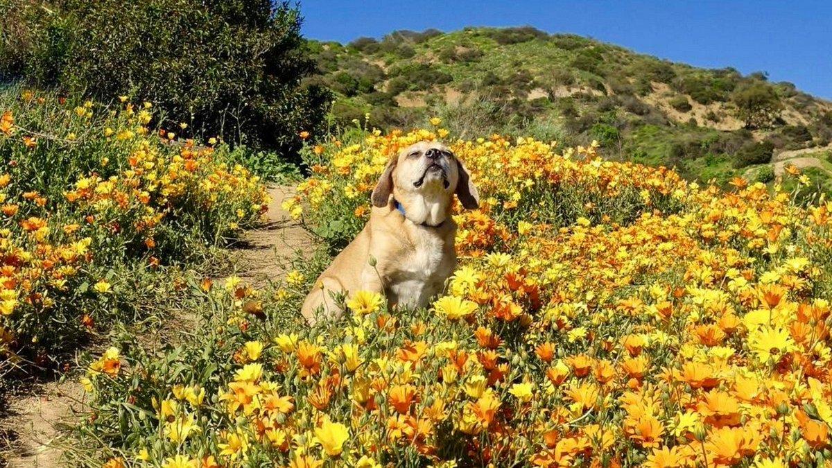 18 photos of dogs enjoying LA parks http://crwd.fr/2m4uOzv #Dogs #Enjoy #LosAngelesPark #LA