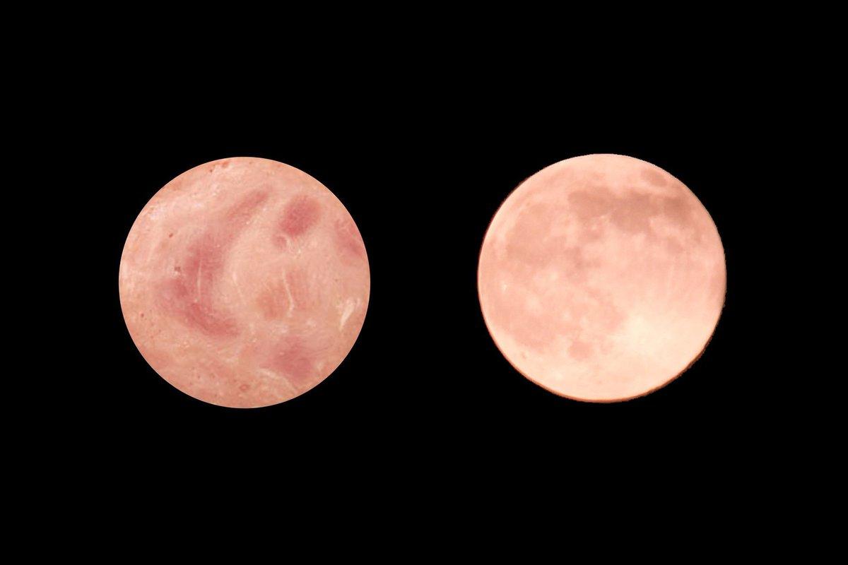 明日はストロベリームーンらしいので去年撮った月とハム載せておきますね