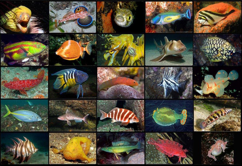 Fishes of Australia (@FishesAustralia) | Twitter