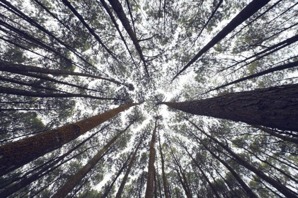#ClimateAction Re-Planting a Forest, One Drone at a Time  https://www. wired.com/brandlab/2015/ 07/re-planting-forest-one-drone-time/ &nbsp; … <br>http://pic.twitter.com/OV3zpmD7PU